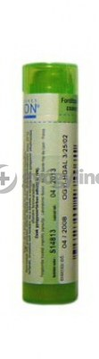 Equisetum hyemale 4 g - hígítás C9