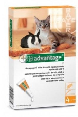 Advantage bolha ellen macskáknak és nyulaknak 4 kg alatt 40 mg 1 db