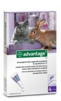 Advantage bolha ellen macskáknak és nyulaknak 4 kg felett 80 mg 4 db